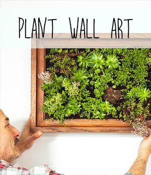 DIY vertical garden living wall art