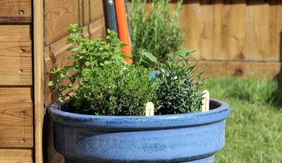 Make a mini herb garden | Click for step-by-step guide