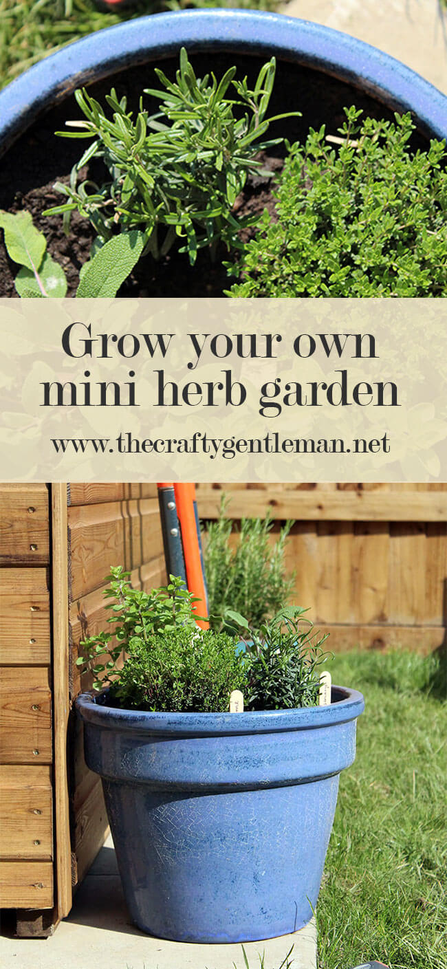 A mini herb garden in a plant pot is a great option if you are short on outside space. This guide shows you how to make one - click to see more.